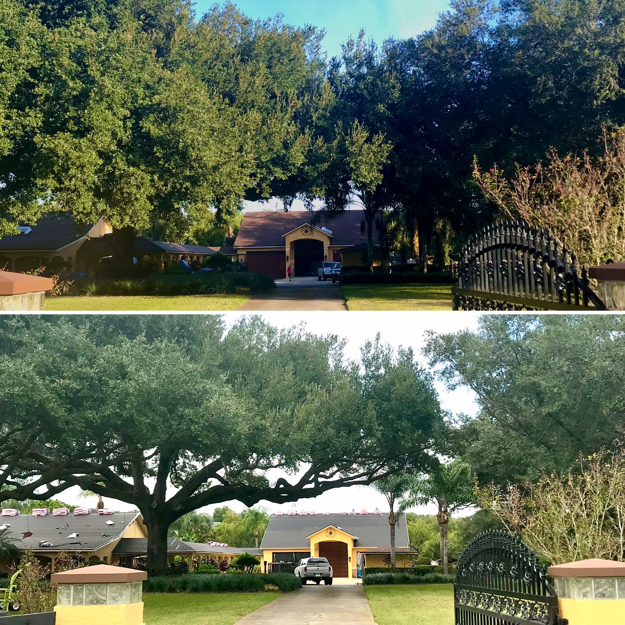 Tree Trimming in Sorrento by Kats Tree Service