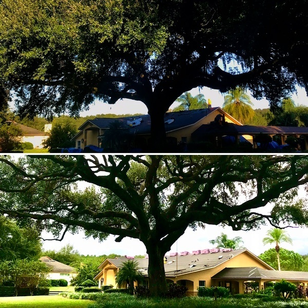 Tree Trimming in Sorrento Florida by Kats Tree Service