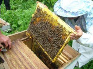 honey-bee-project-donation