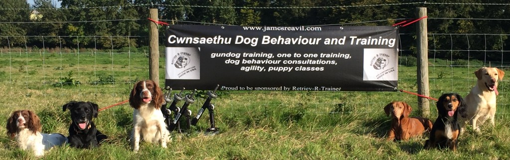 Gundog training Kent