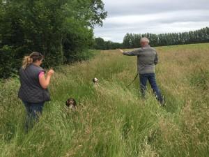 Spaniel Gundog training, Kent