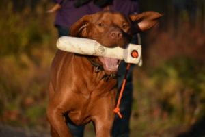 rebelritsi photography gundog training