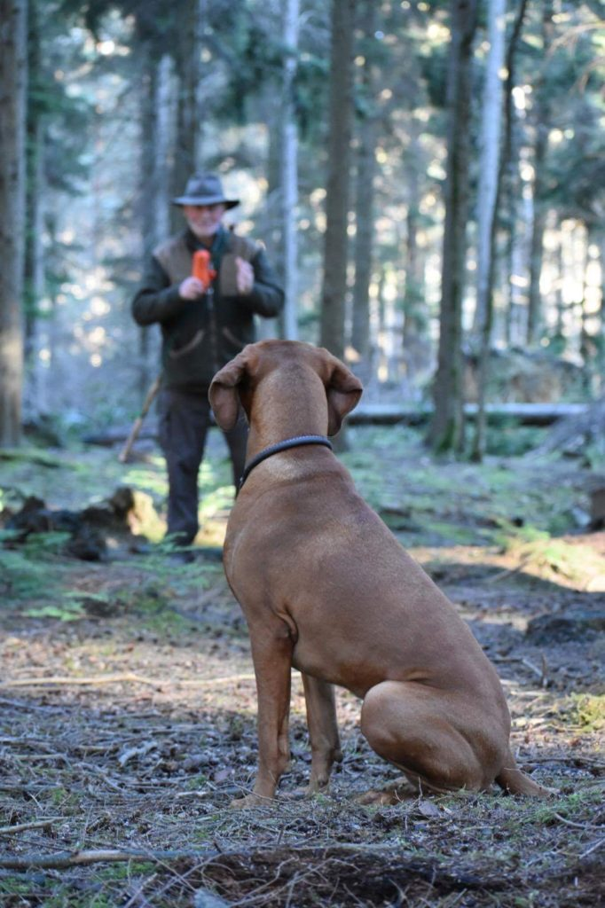 Gundog training Kent Sussex and Surrey