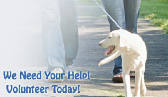 PAWWS-Paws Assisting Wounded WarriorS
