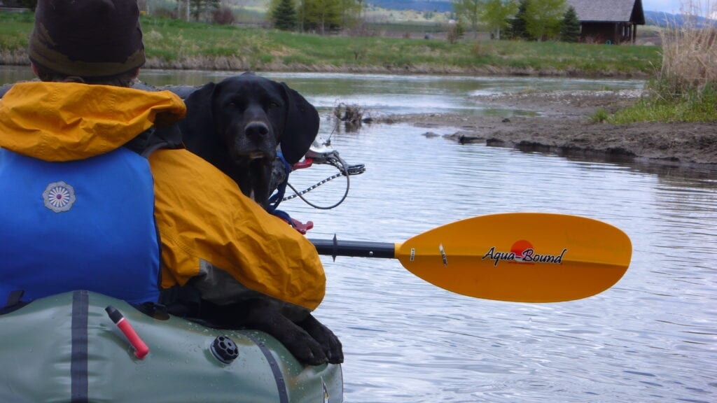 An Adventurer and a Dog in a Boat