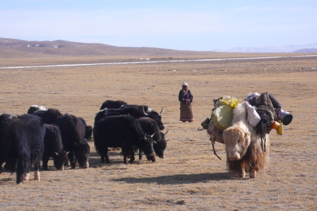 Animals from the Tibetan Plateau