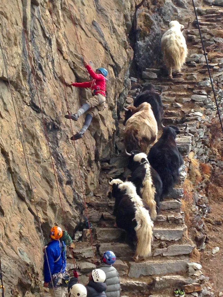 Several People Wall Climbing While Animals are Passing By