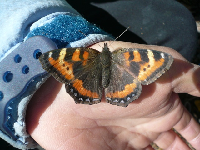 A Butterfly on Someone's Hand