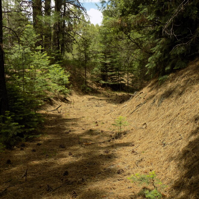 Wide, flat-bottom trail segment created for wheeled vehicles like wagons or carts.