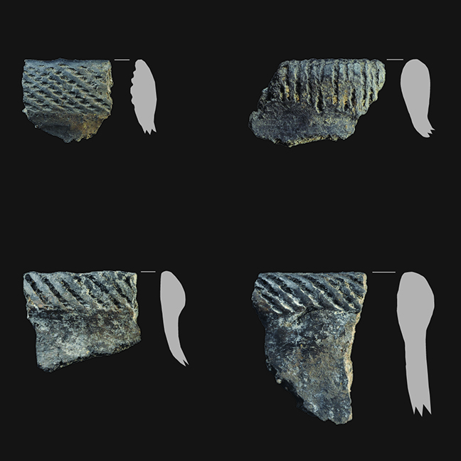 Sample of pottery rims from Molander.