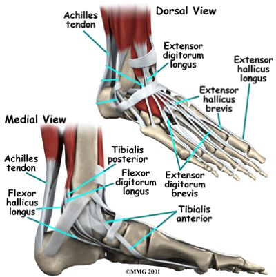Tendon or ligament injury