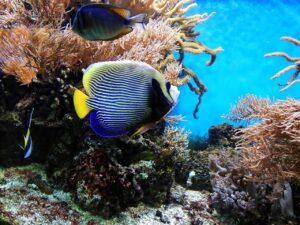 coral, fish, underwater