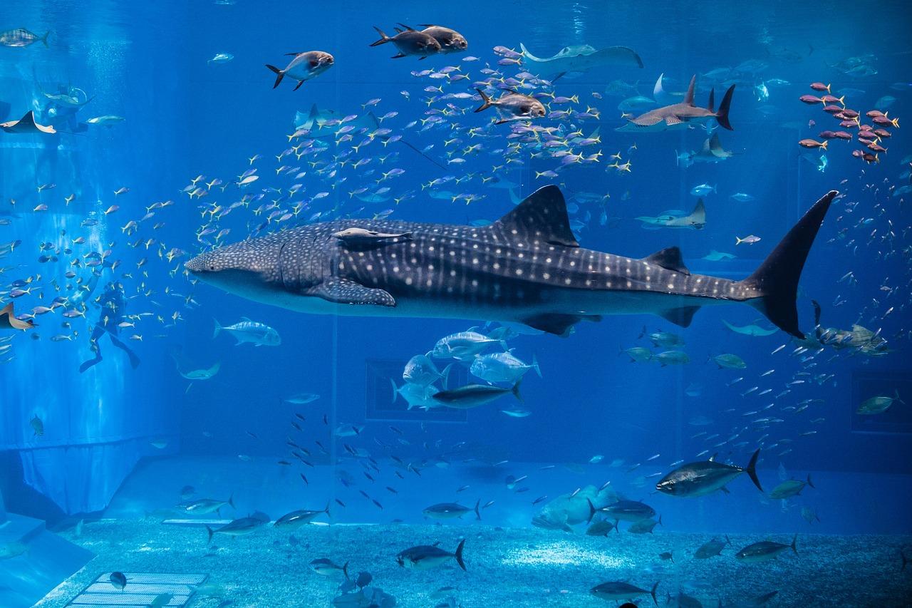 whale, aquarium, fish