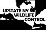 Upstate NY Wildlife Control