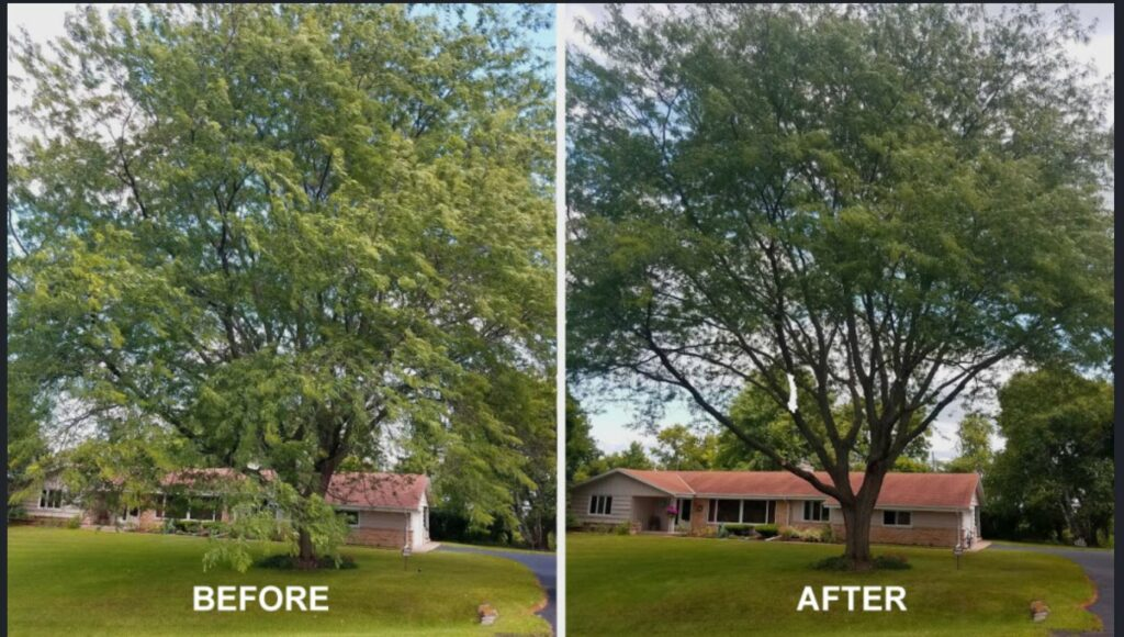 Tree Cutting and Pruning Danvers