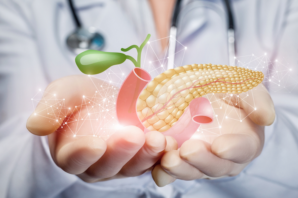 doctor's hands holding an graphic of healthy bowels
