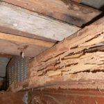 termite control newcastle