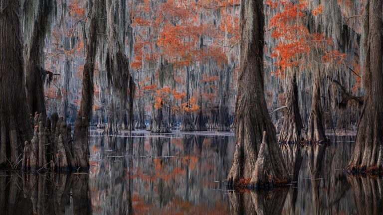 Fall Colors Cypress Swamps