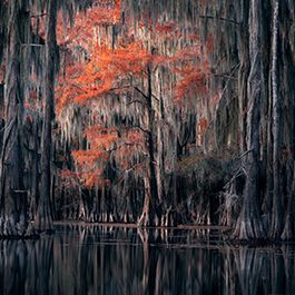 Fall colors in Cypress Swamps