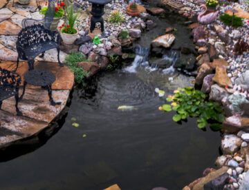 hybrid pond with water garden and koi fish