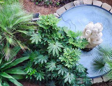 Decorative pond in the garden.