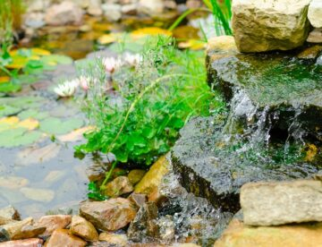 Tips on how to keep your pond clean.