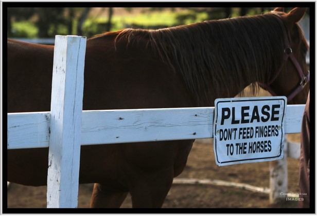 tbtra horse and sign