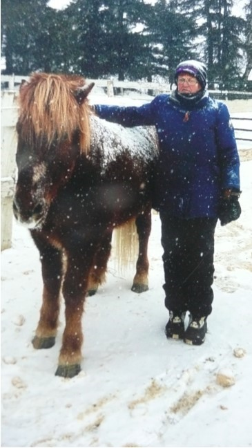 tbtra horse in snow