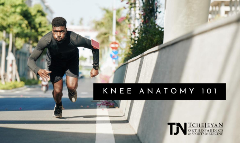 Knee Anatomy 101