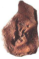 Dimetrodon with Raindrops track replica
