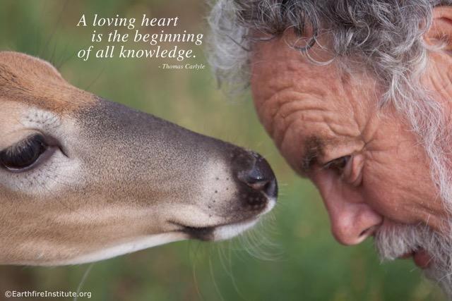 The Spiritual Wisdom of Animals