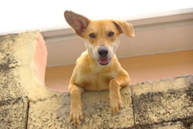 animal-reiki-dog-energy