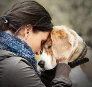 39571030 - woman with her dog tender scene