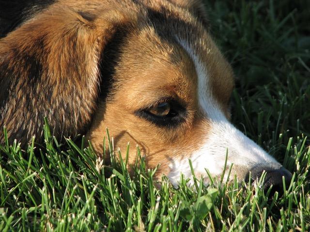 Doggie Depression