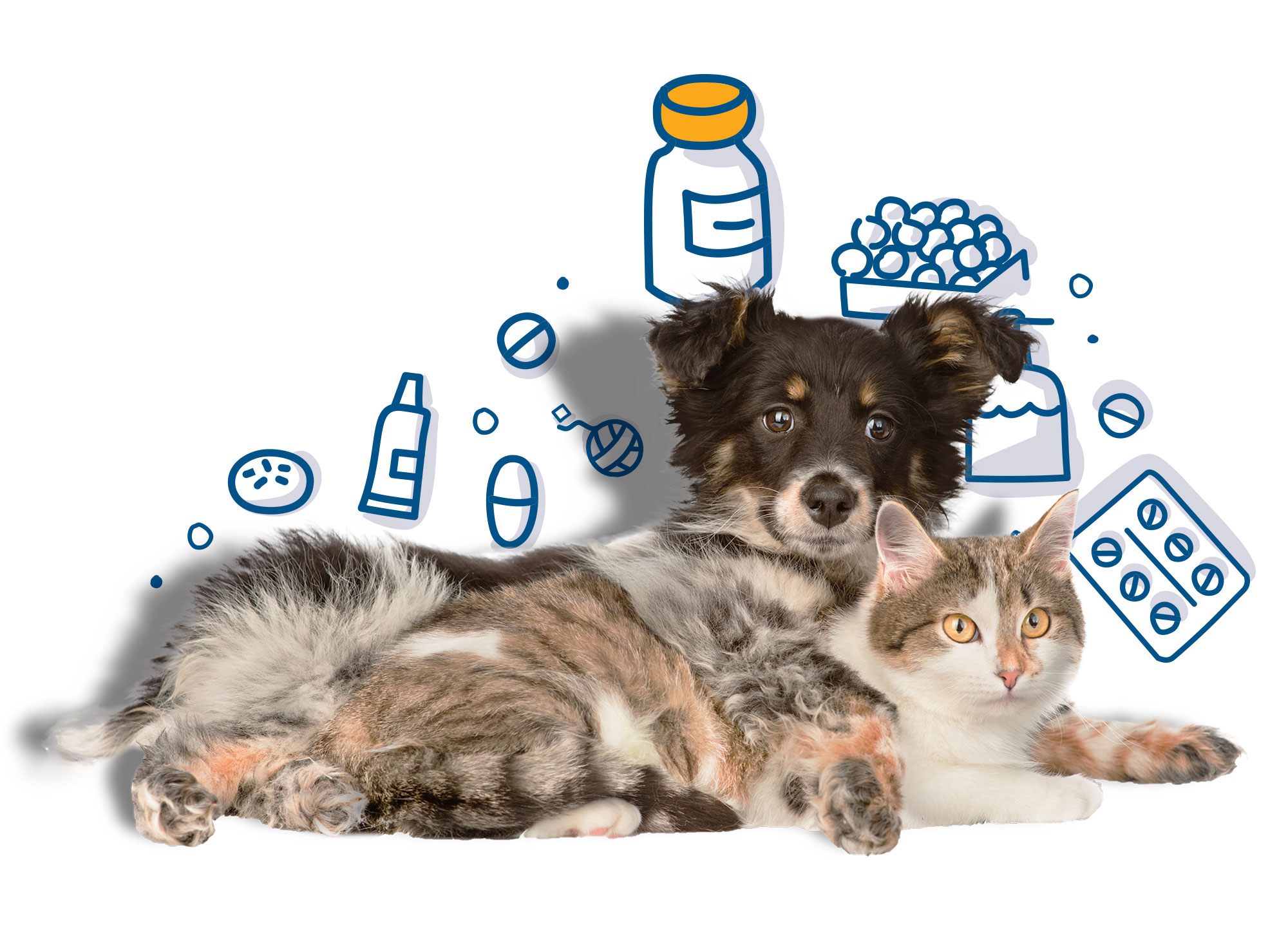 Are These Pet Dangers Lurking In Your Home?