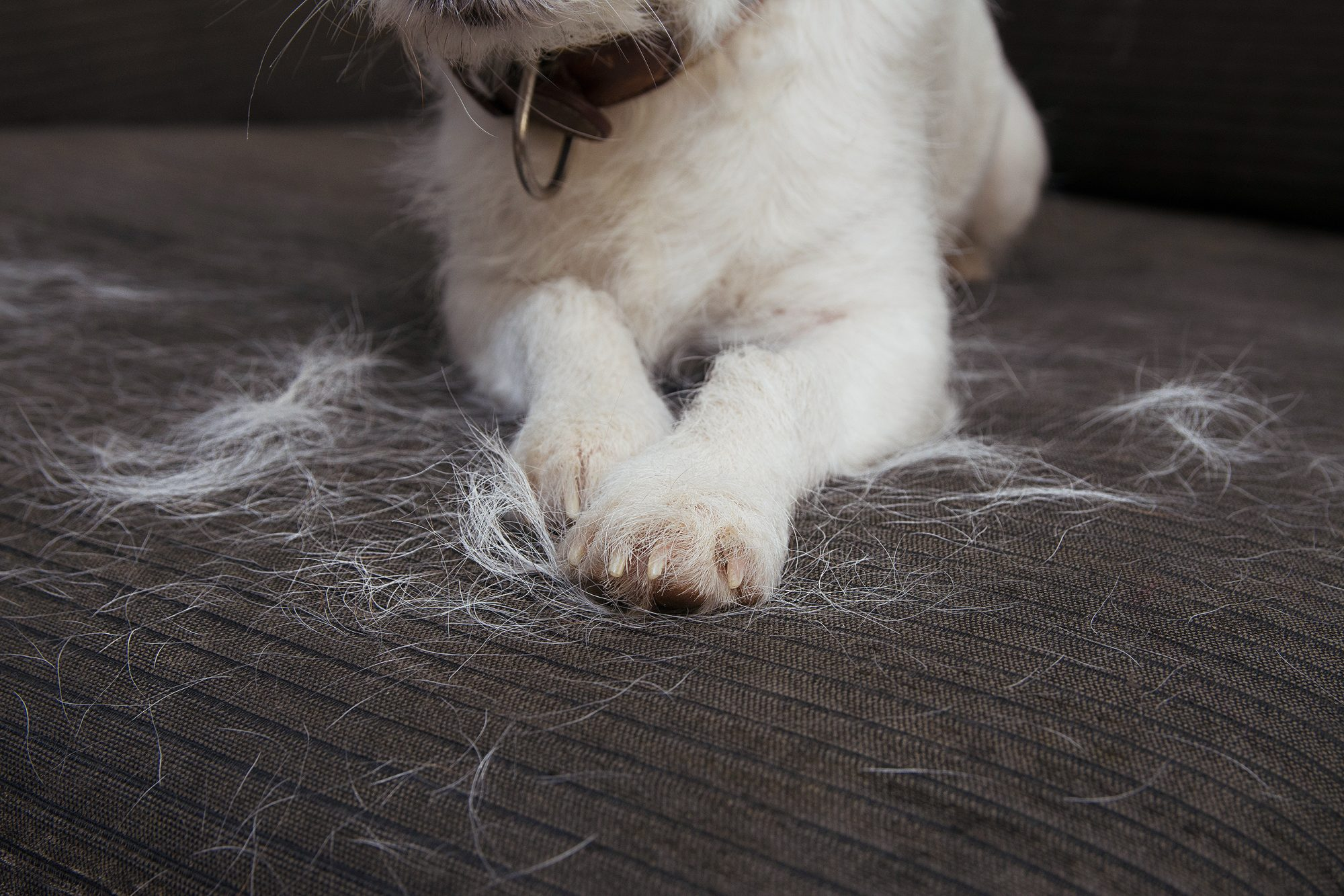 What the Reiki Precepts and Pet Hair Have in Common