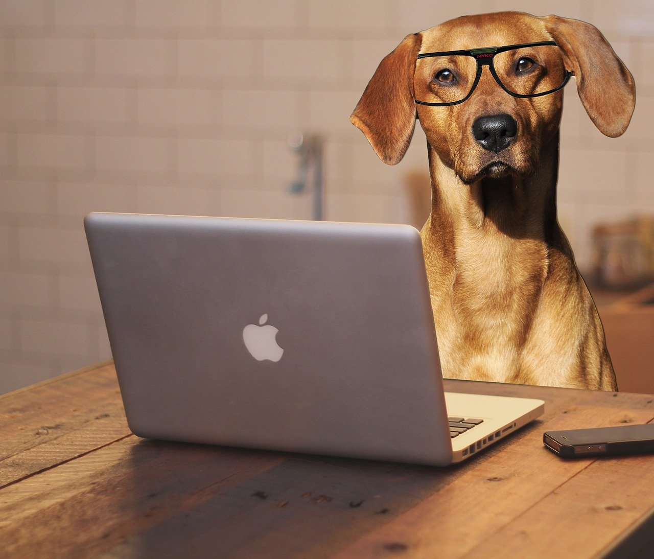 Dog with glasses sitting in front of a laptop computer on a desk.