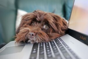 Puppy laying his head on a laptop's keyboard