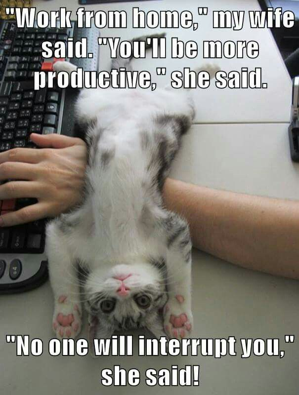 Person trying to work from home with a cat draped over their arms while they attempt to type