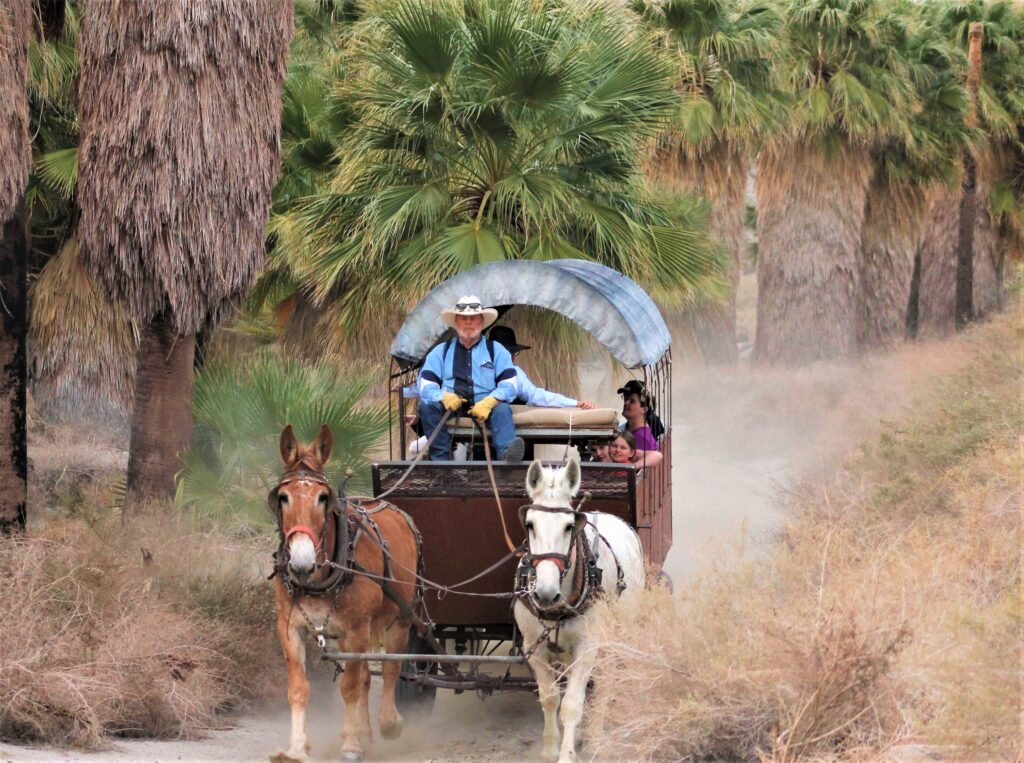 Things to Do With Kids in Palm Springs