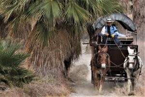 palm springs off road tours