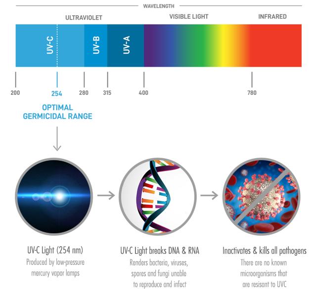 ultra violet light explainer for disinfection