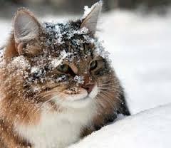 cat_in_snow