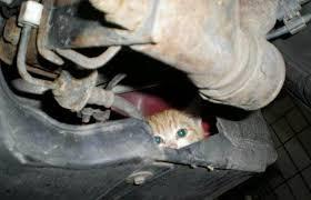 kitten_in_engine (1)