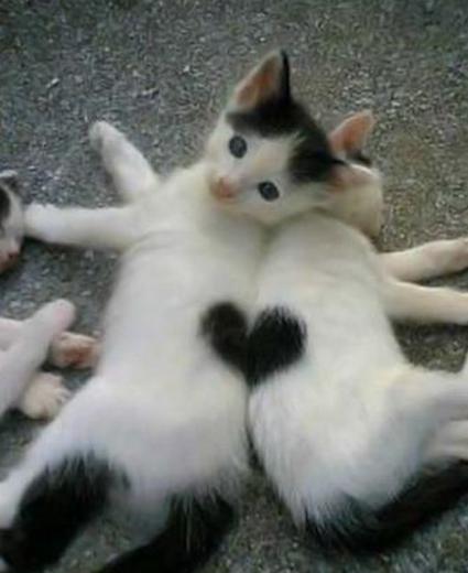 heart kittens