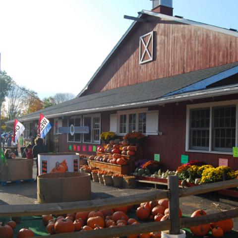 Pumpkin Picking in Bethel CT