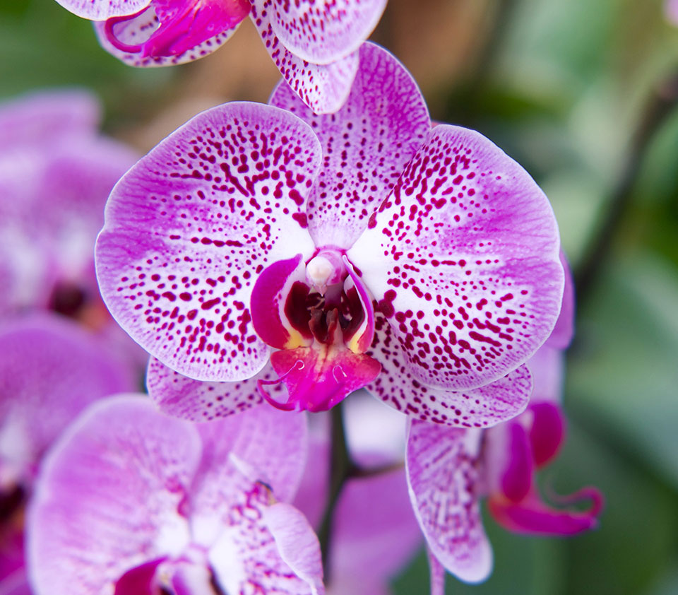 The Orchid Society