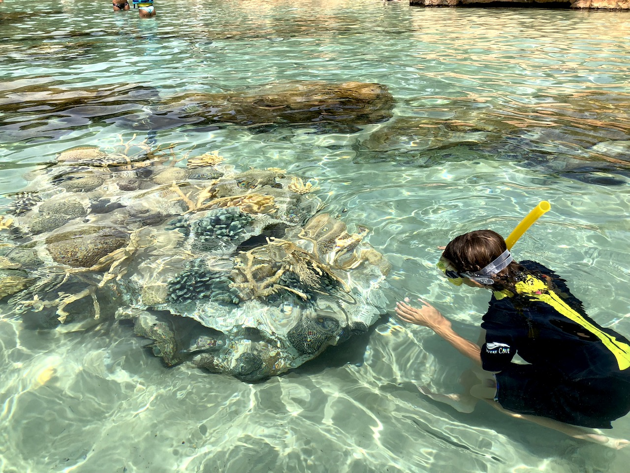 Discovery Cove Coral