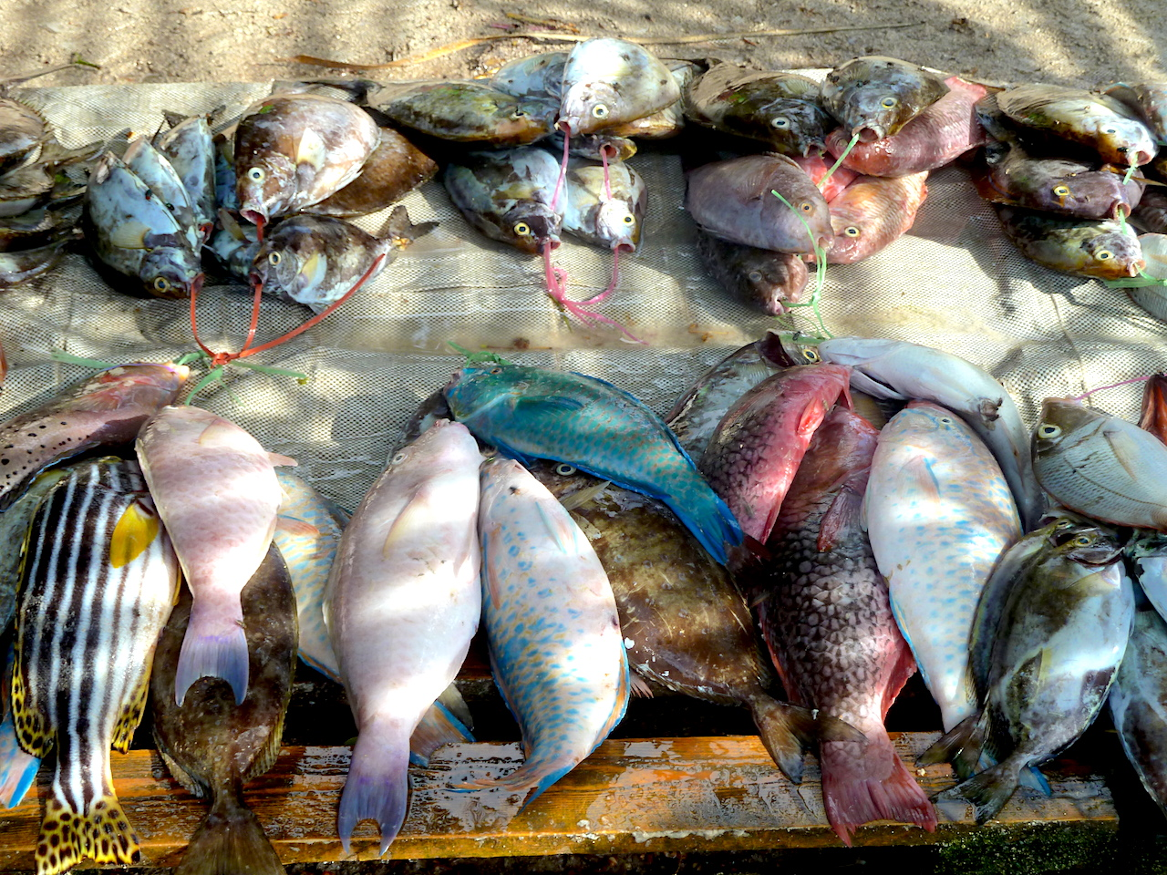 Fish on the side of the road on Mahé, Seychelles. #FishMarket #Mahe #Seychelles #SeychellesBeach