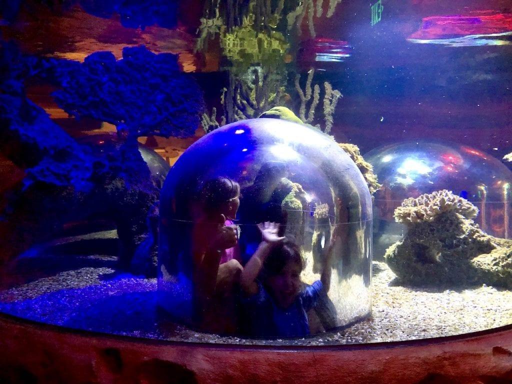 5 Reasons To Visit SEALife Orlando   Orlando attractions that are not theme parks   SEALife Orlando aquarium   Orlando with kids   ICON Park Orlando   Orlando eye   Florida aquarium   #sealife #sealifeorlando #orlandoaquarium #orlandoattractions #orlandowithkids